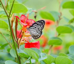 butterfly lightroom-9