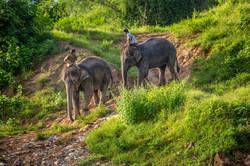 elephant edit57 copy