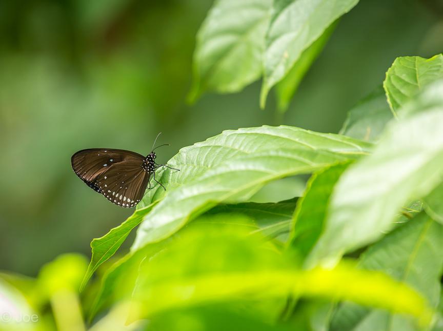 butterfly lightroom-7