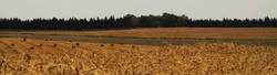 Field of Wheat  2014-5-23-16:52:38