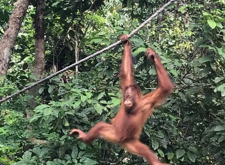 Découverte de Borneo : Notre itinéraire idéal de 4 jours à Kuching et Bako Park !