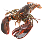 cooked-lobster-2.png