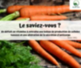 Le_jaune_d'oeuf,_riche_en_vitamines_A,_p
