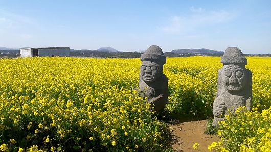 Jeju flower 04