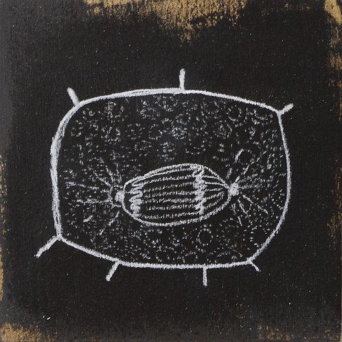 Dessin micro-organisme 01