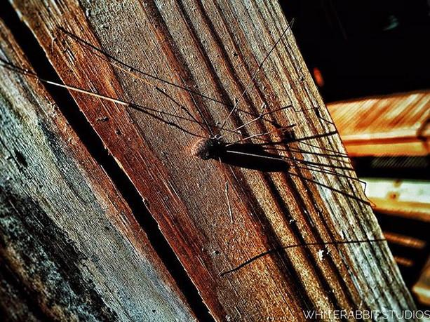 26_ Spider._._._._._._._._._._.jpg