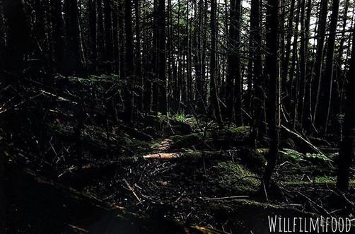 59_ Mt. Mitchell pt. 3__._._._._._._._._