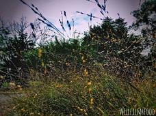 36_ Grass._._._._._._._._.jpg