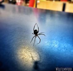 35_ Spider 2._._._._._._._._._._._.jpg