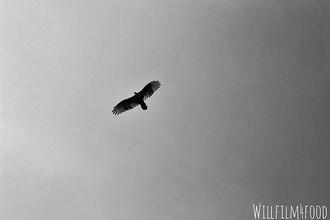 86_ Hawk._._._._._._._.jpg