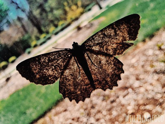 44_ Butterfly._._._._._._._._.jpg
