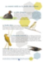 page.oiseaux.jpg