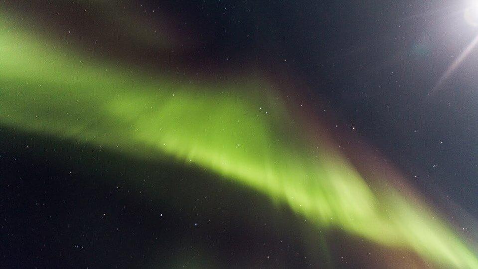 Aurora|Yukon|Boreal Kennels