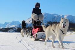 Mush|Yukon|Boreal Kennels