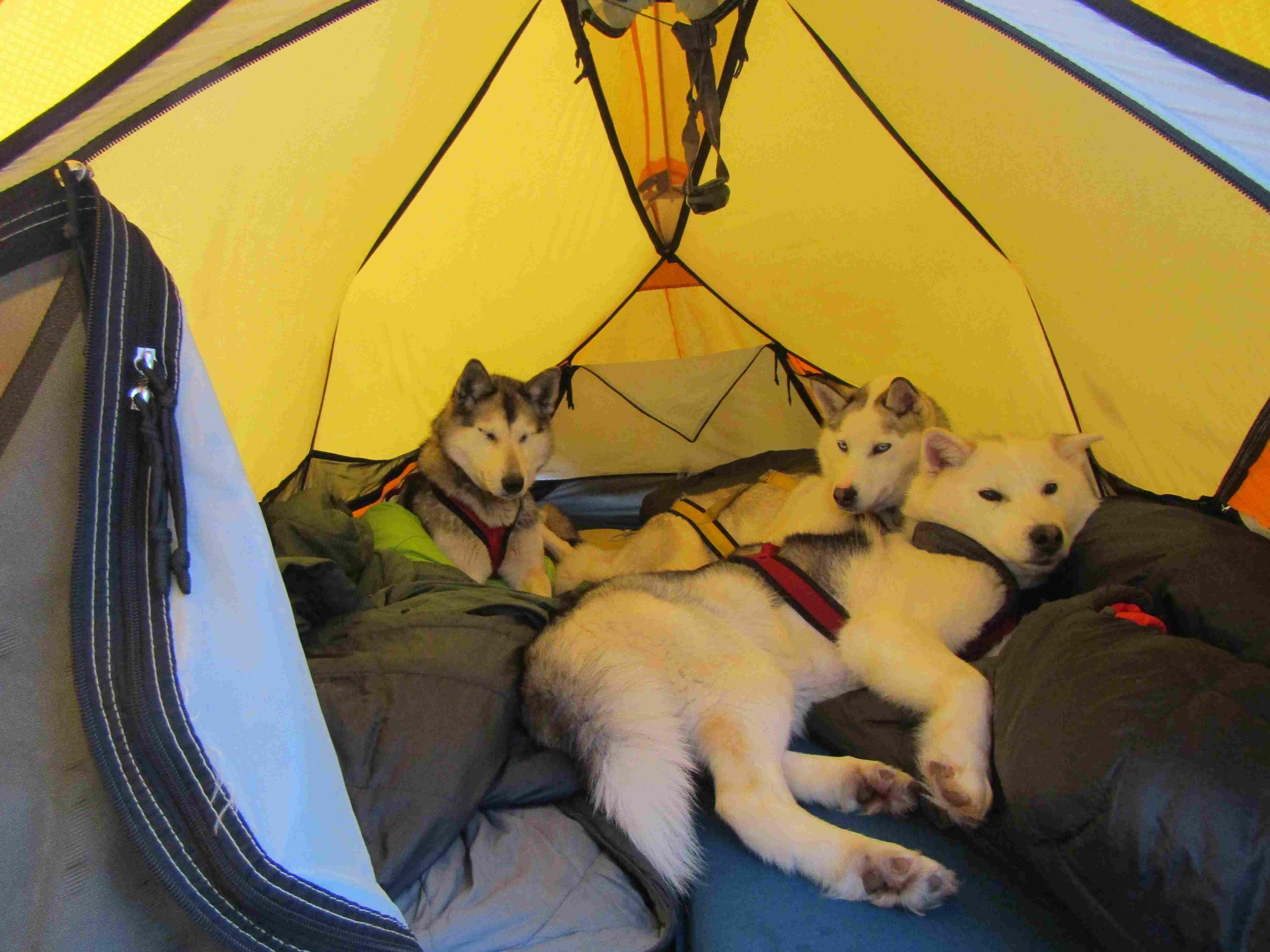 Vacances hiver|Yukon|Boreal Kennels