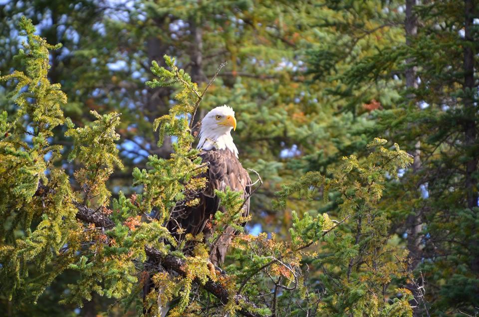 Photography trips|Yukon|Borealkennel