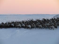 Photography tours|Yukon|Borealkennel