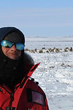 Yukon Dog Sledding Guided Tours
