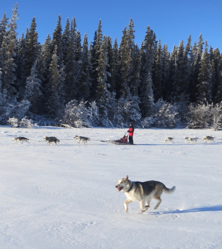 Dog mushing|Yukon|Boreal Kennels
