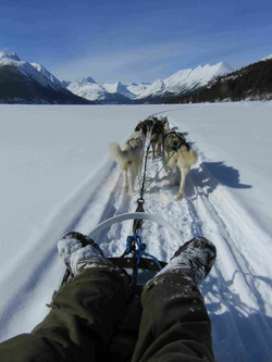 Mush Yukon|Yukon|Boreal Kennels