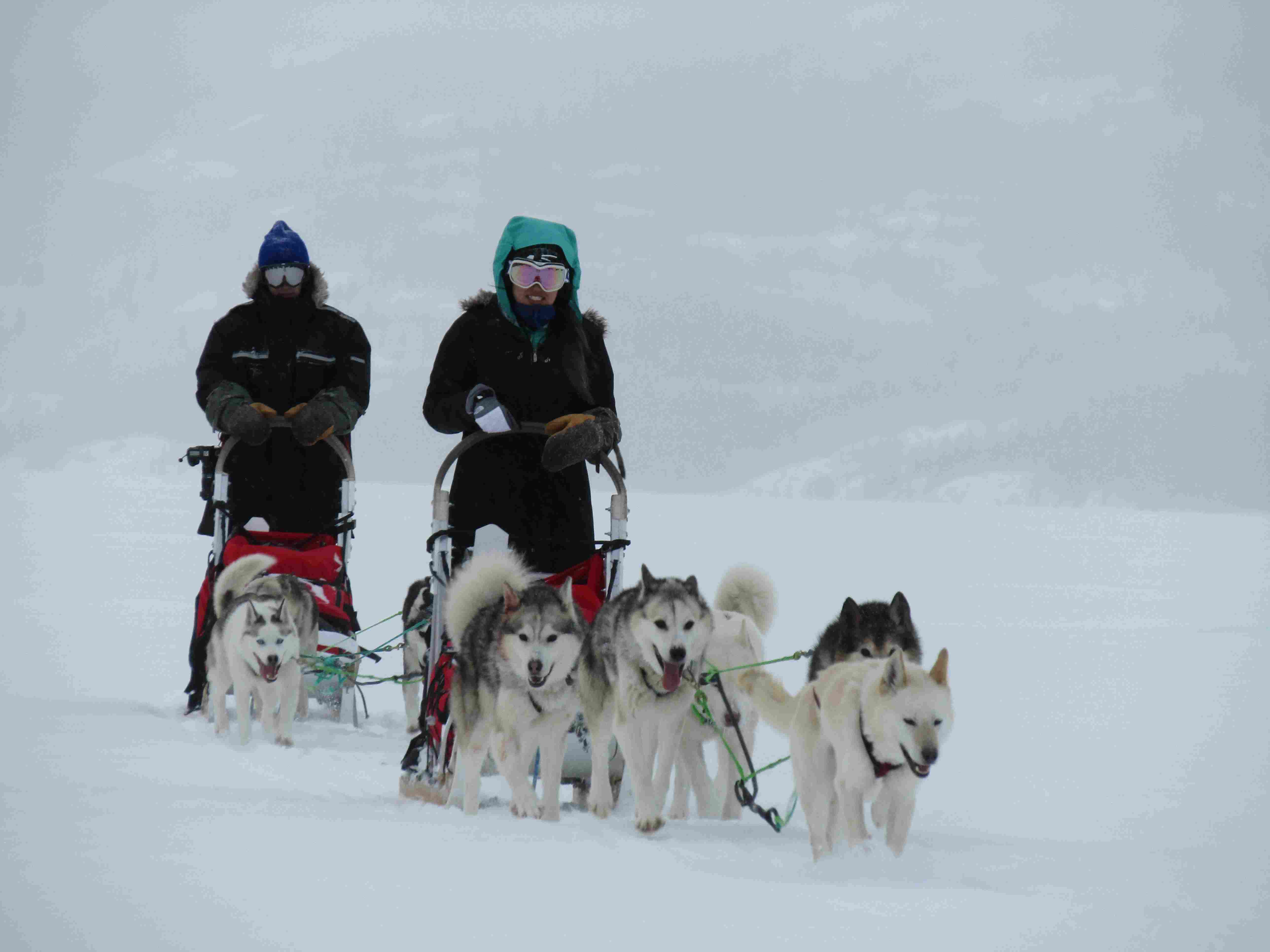 Mushing|Yukon|Boreal Kennels