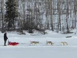 Dog team|Yukon|Boreal Kennels