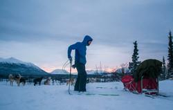 borealkennels.com- Dog sledding trip