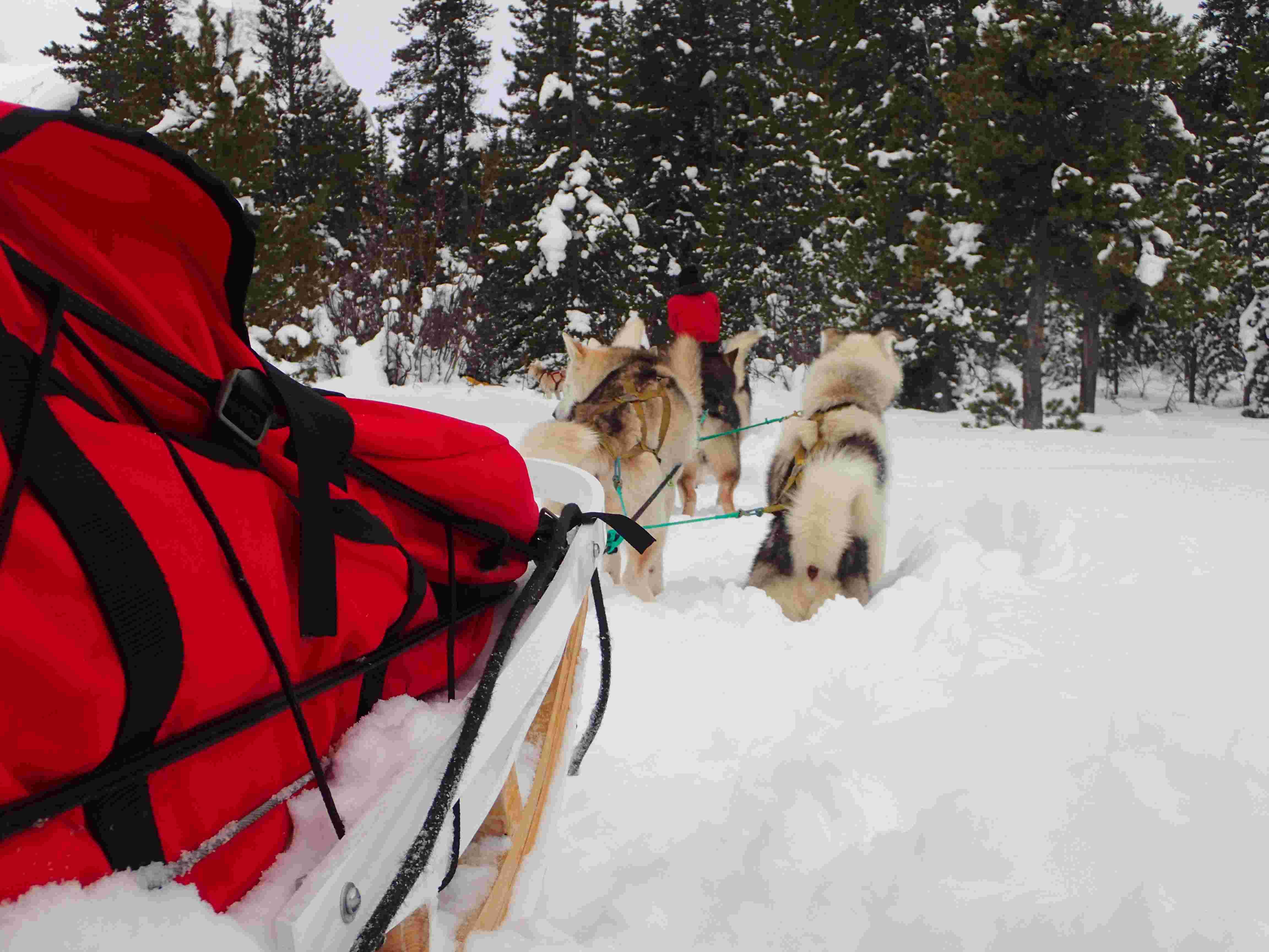 Mushing trips|Yukon|Boreal Kennels