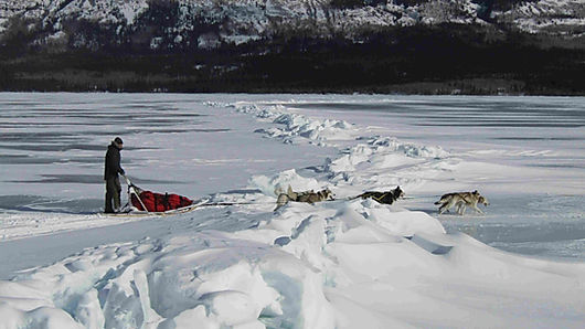 Yukon multi day dog sleding adventures tours