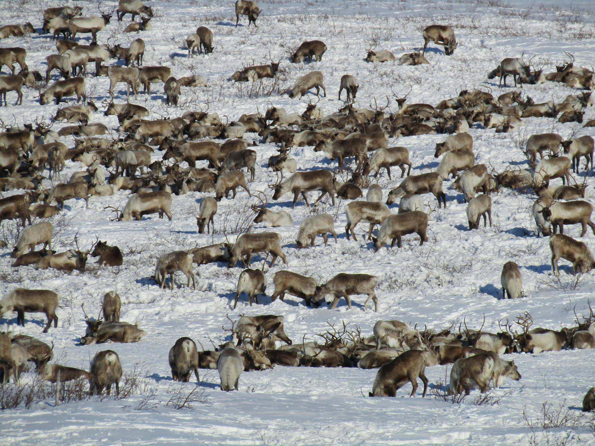 Wildlife Photography|Yukon|Borealken