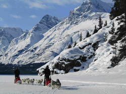Dog Mushing|Yukon|Boreal Kennels