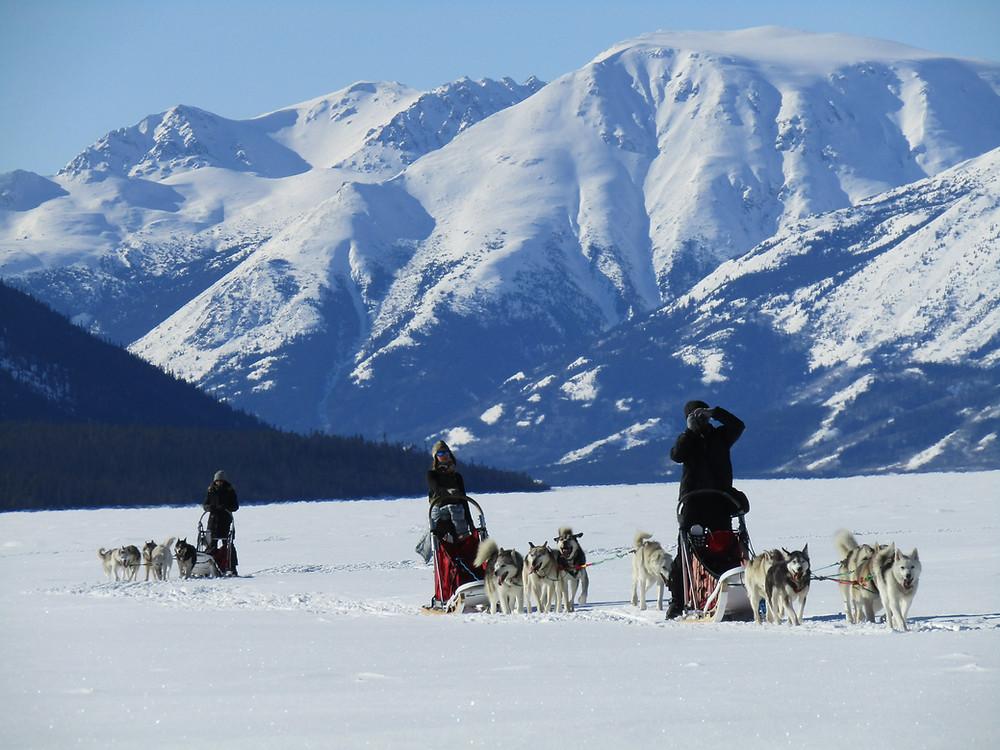 multi day dog sledding tour in Yukon, Canada