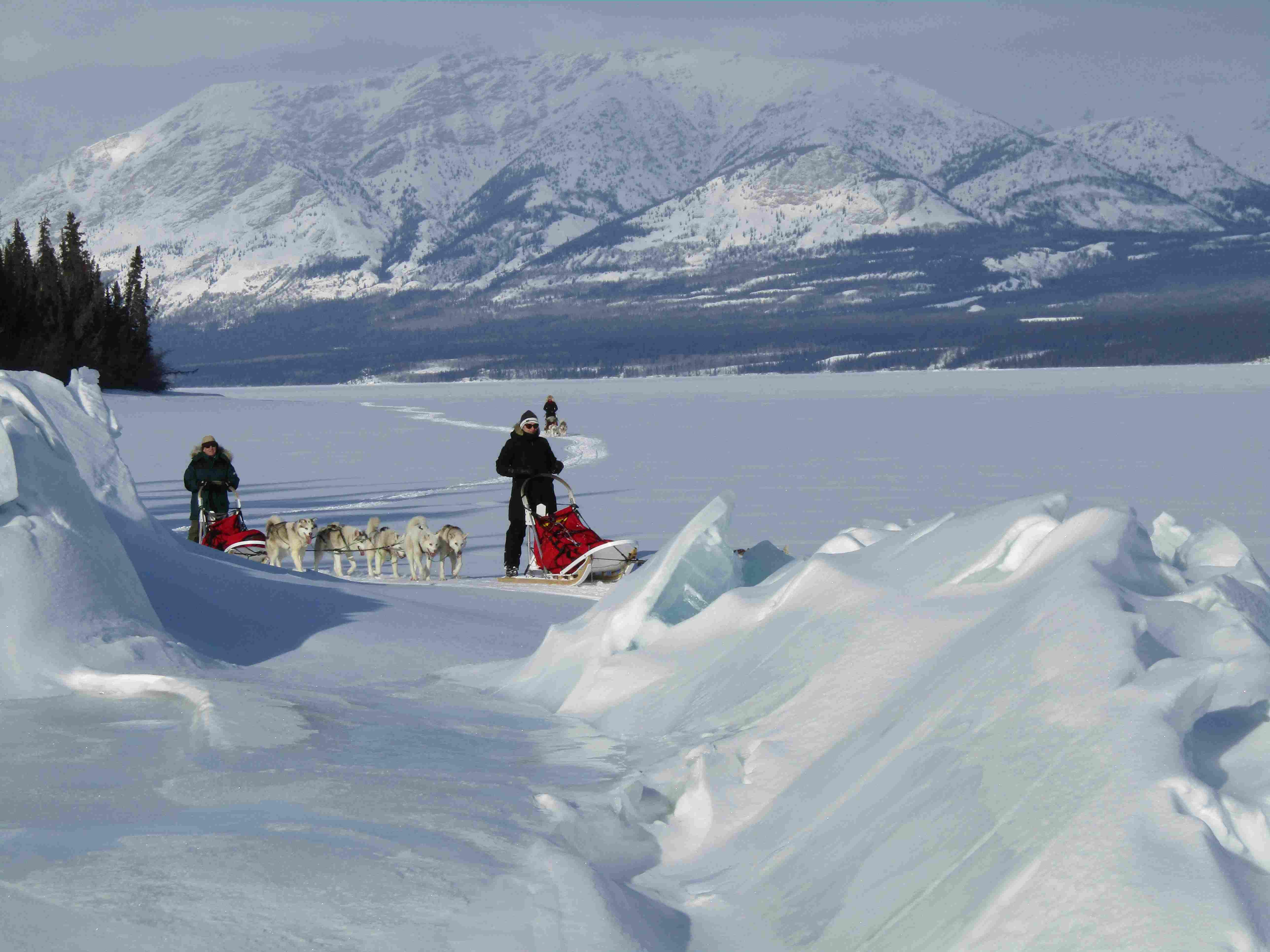 Southern lakes|Yukon|Boreal Kennels