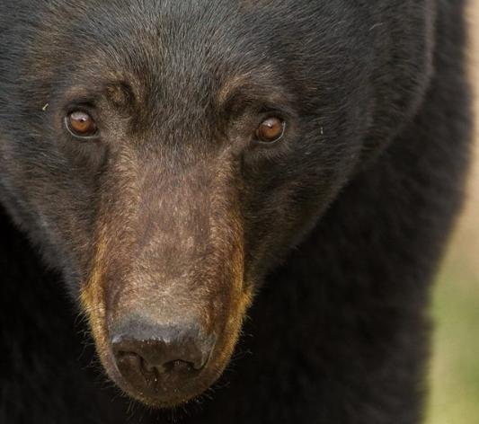 Yukon wildlife photography expeditions|Yukon|Borealkennels
