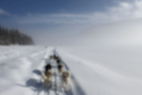 Yukon Mushing|Yukon|Borealkennels