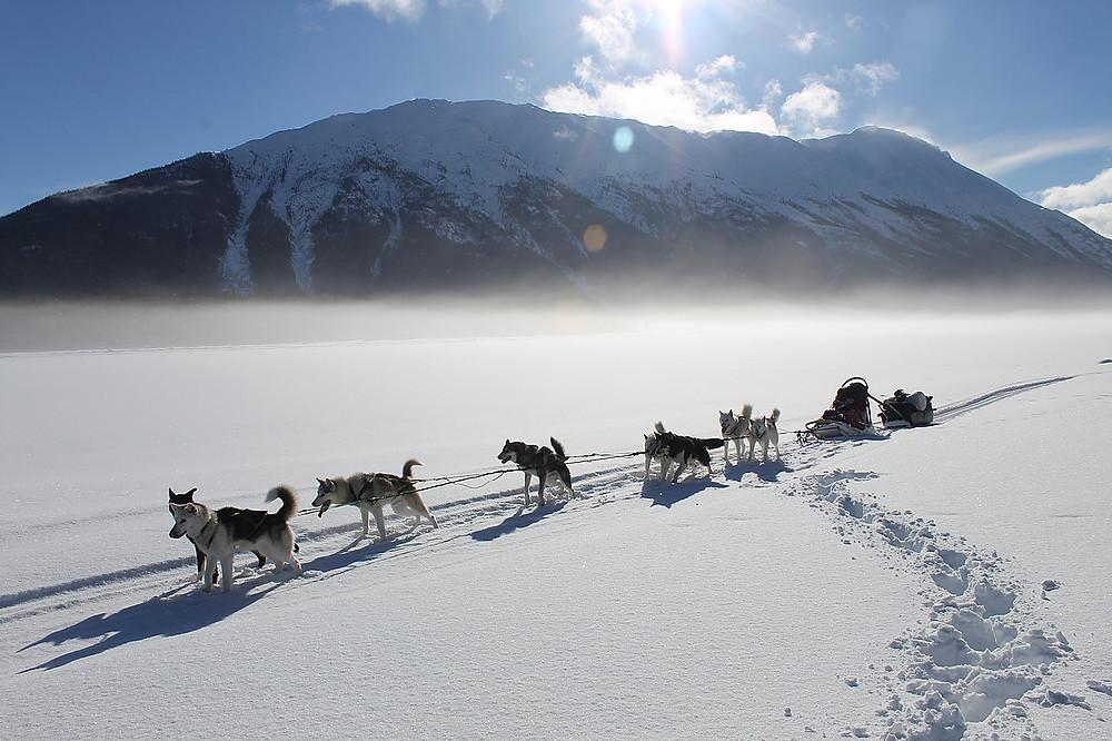 Dog team in the Yukon wilderness.