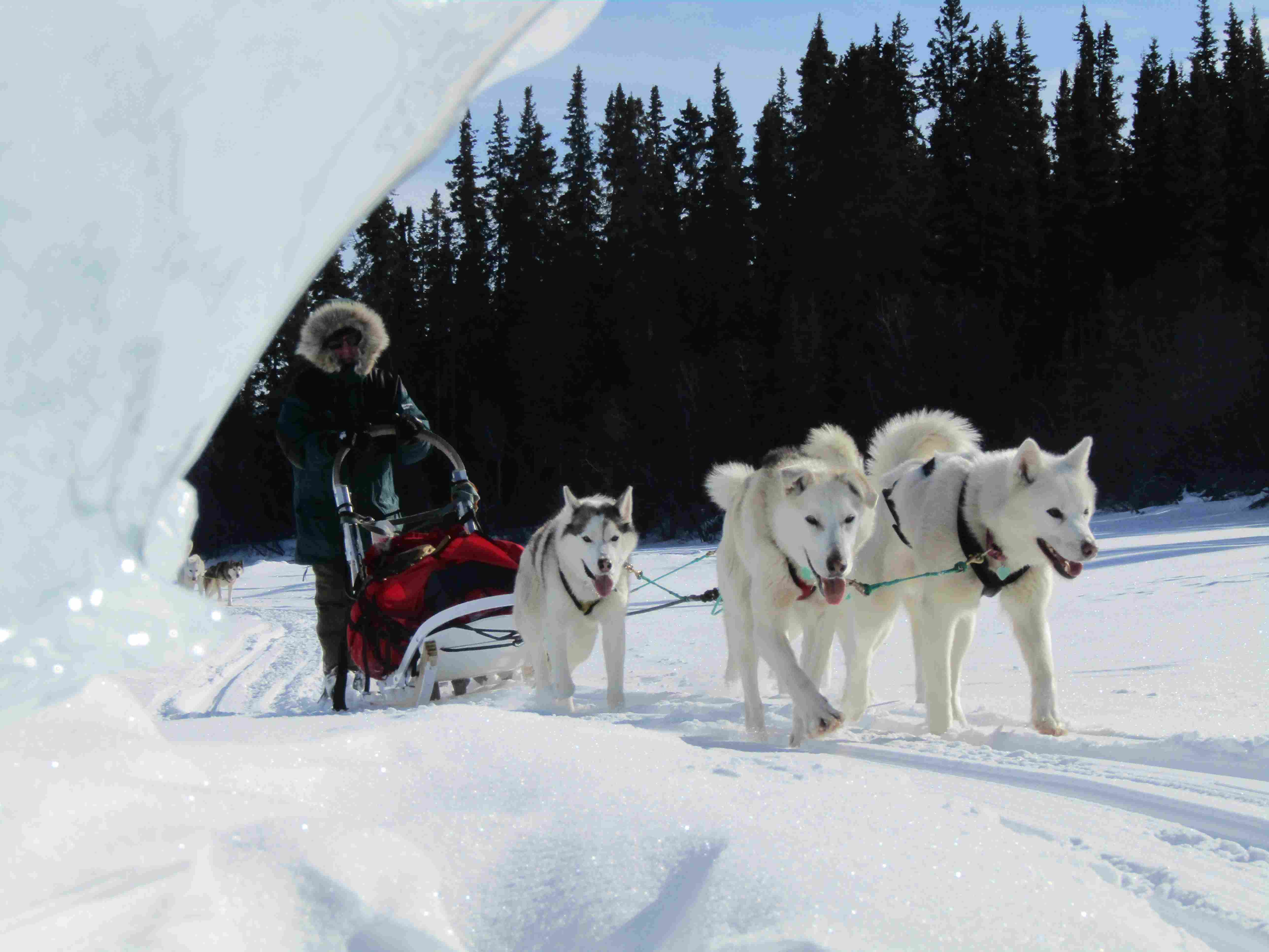 Dog Sledding|Yukon|Boreal Kennels