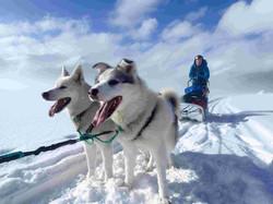 Dog Sleddding|Yukon|Boreal Kennels