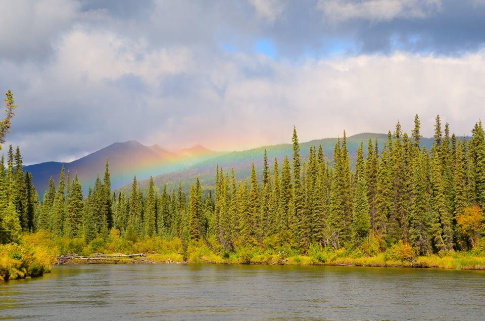 Vacances|Yukon|Borealkennels