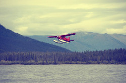 borealkennels.com- Beaver take off