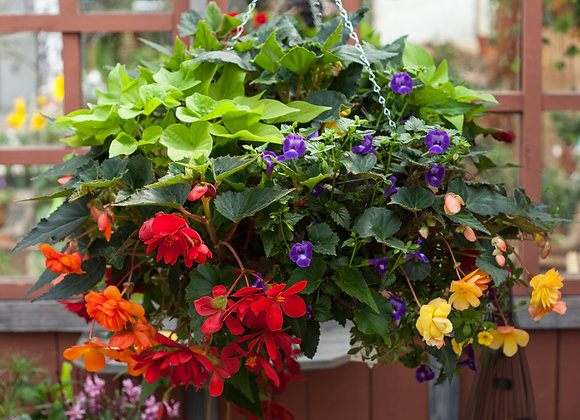 """Recipe #S1, 16"""" Shade Wire Hanging Basket"""