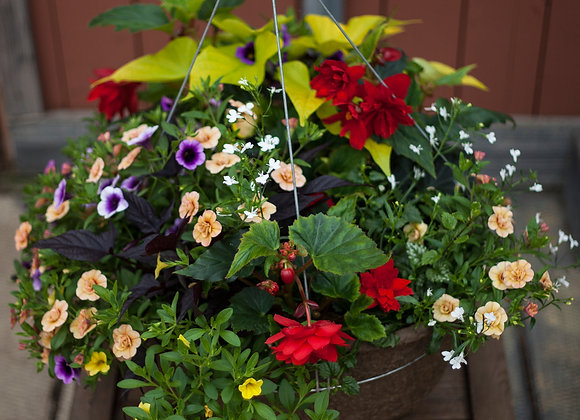"""Recipe #1, 16"""" Shade Large Peat Red and Yellow Hanging Basket"""