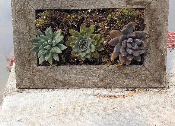Succulent Frame Planter Pl0133