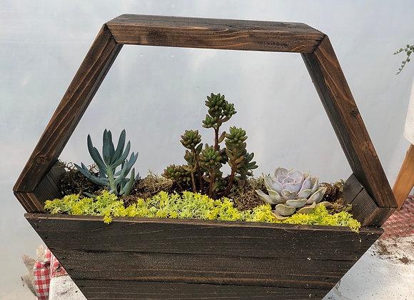 Hexagon Succulent Planter Pl0131