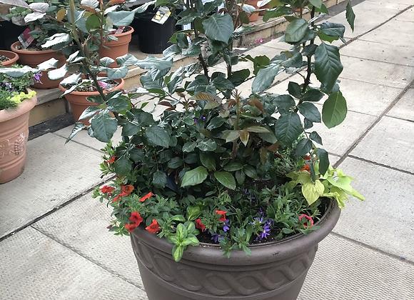 Rose Pot Pl0149