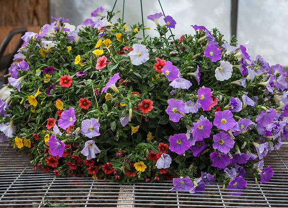 "Recipe #7, 12"" Sun Hanging Basket"