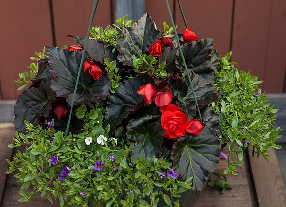 "Recipe #21, 12"" Sun Hanging Basket"
