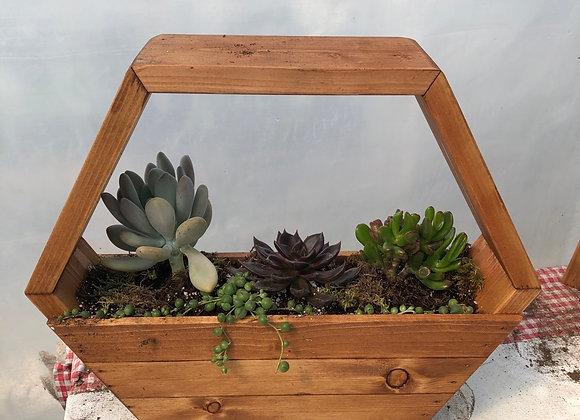 Hexagon Succulent Planter Pl0132
