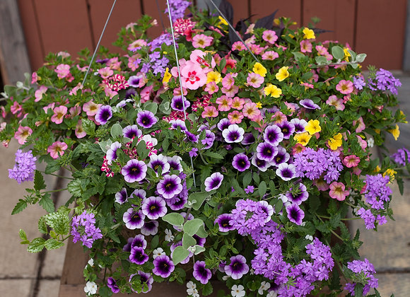 "Recipe #3, 16"" Sun Large Peat Pink Hanging Basket"