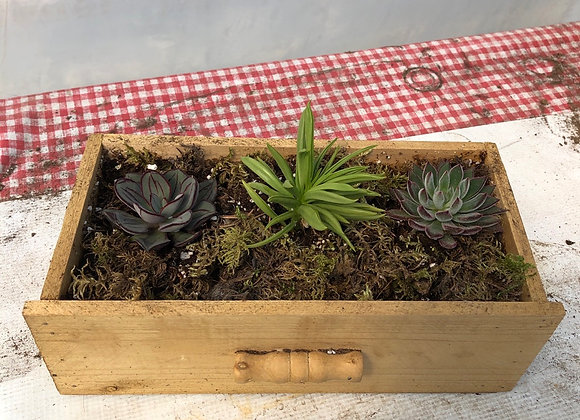 Small Drawer Succulent Planter Pl0134
